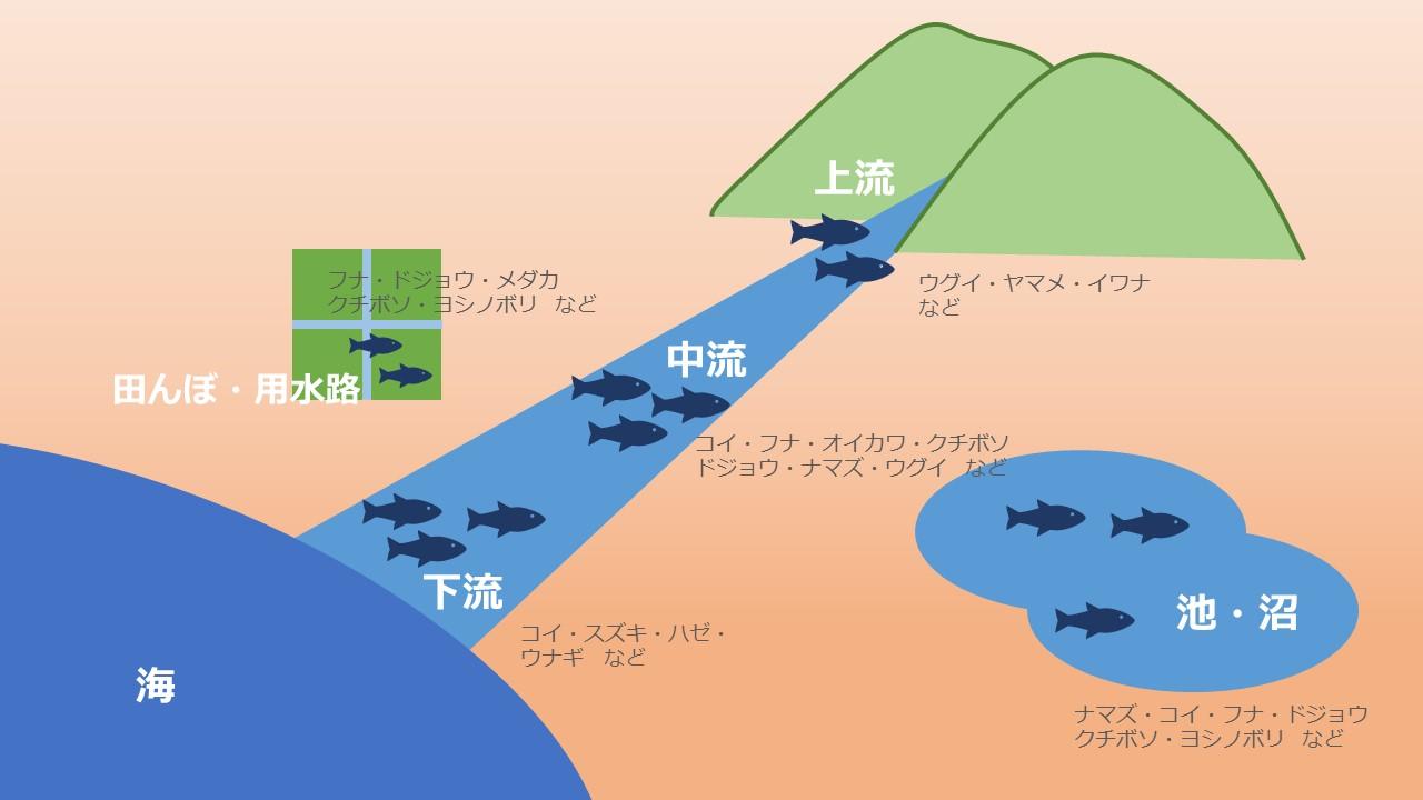 川魚の生息域