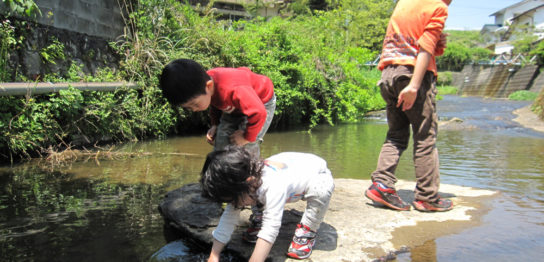 川魚の飼い方